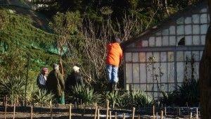 Февральские работы в саду